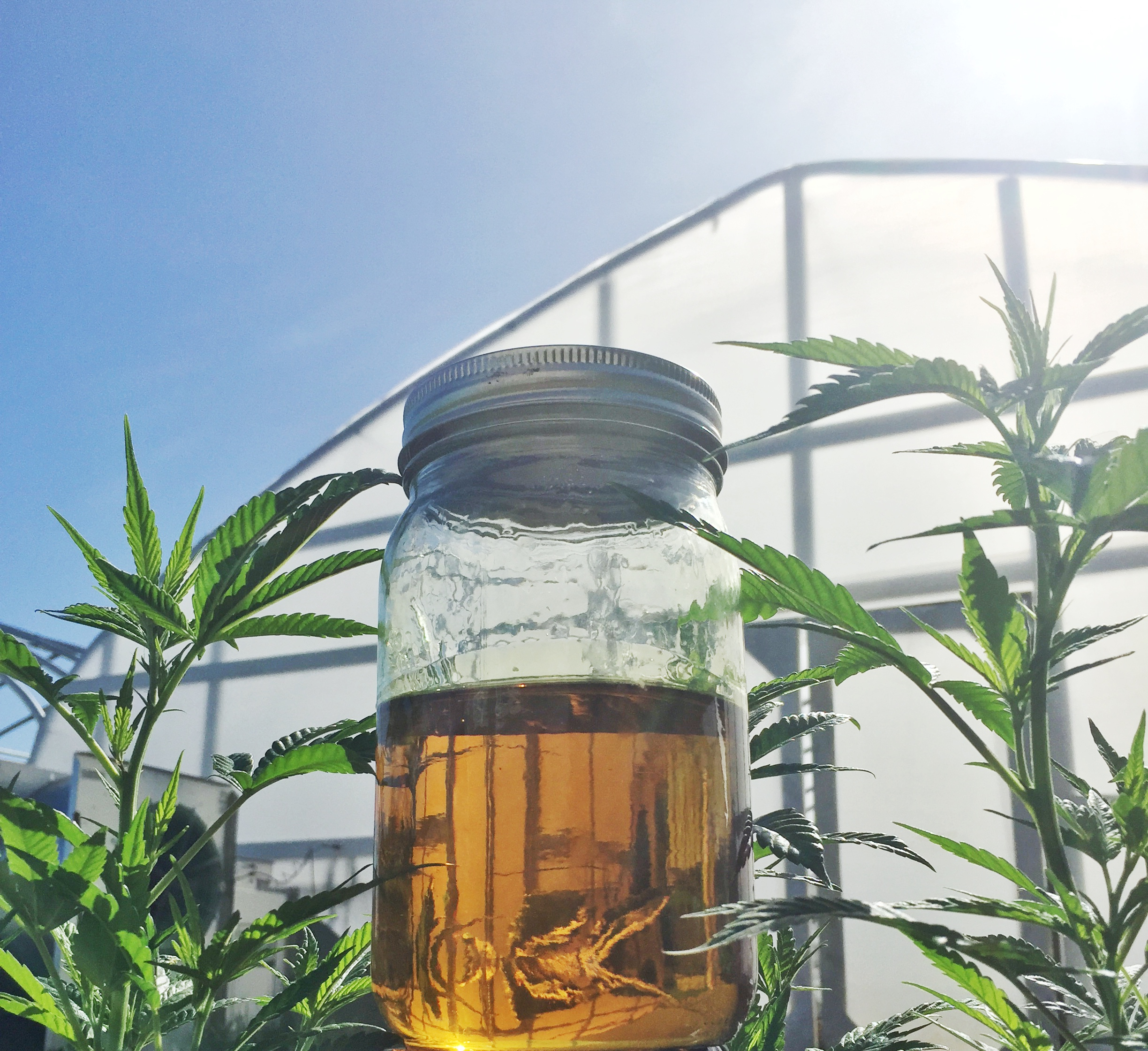 Global Hemp Group Subsidiary Contracts to have CBD Extracted